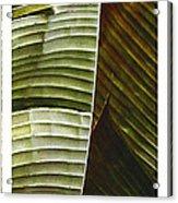 Breeze - Banana Leaf Triptych Acrylic Print