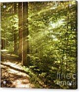 Eternal Woods Acrylic Print