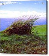 Breezy Hill Acrylic Print