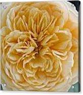 Brenda's Garden I Acrylic Print