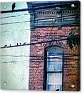 Brick Building Birds On Wires Acrylic Print