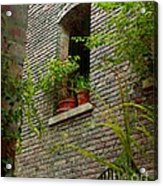 Brick With Greenery Acrylic Print