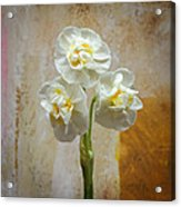 Bridal Crown Narcissus Square Acrylic Print