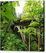 Bridge And Lush Vegetation Acrylic Print
