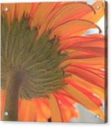 Bright And Sunny Acrylic Print