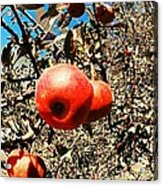 Bright Apples Acrylic Print