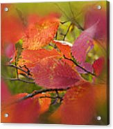 Bright Autumn Leaves Acrylic Print