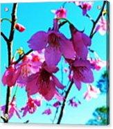 Bright Blossoms Acrylic Print