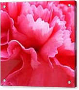 Bright Carnation Acrylic Print