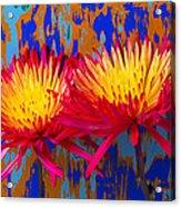 Bright Colorful Mums Acrylic Print