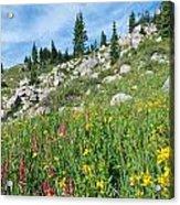 Bright Colors Of A Colorado Summer Acrylic Print