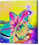 Bright Daff Acrylic Print