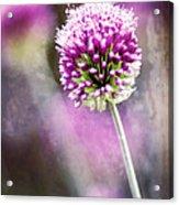 Bright Drumbstick Acrylic Print