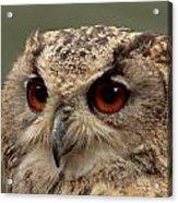 Bright Eyed Eagle Owl  Acrylic Print