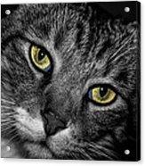 Bright Eyes Acrylic Print