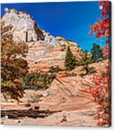 Bright Fall Colors At Zion Acrylic Print