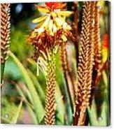 Bright Flower 1 Acrylic Print