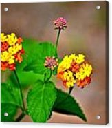 Bright Flowers Acrylic Print