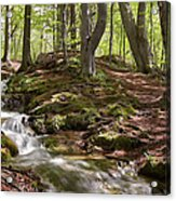 Bright Forest Creek Acrylic Print