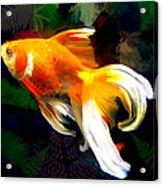 Bright Golden Fish In Dark Pond Acrylic Print