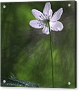 Bright Light Flower Acrylic Print