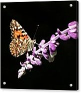 Painted Lady Butterfly On Purple Flower Acrylic Print