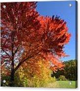 Bright Orange Of Fall Acrylic Print