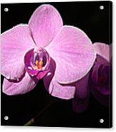 Bright Orchid Acrylic Print