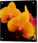 Bright Orchids Acrylic Print