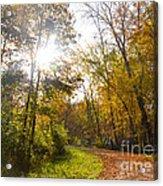 Bright Path Acrylic Print