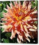 Bright Peachy Star Acrylic Print