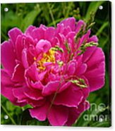 Bright Pink Blossoms Acrylic Print
