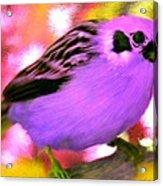 Bright Purple Finch Acrylic Print
