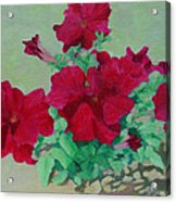 Red Flowers Art Brilliant Petunias Bright Floral  Acrylic Print