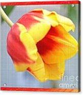 Bright Tulip Acrylic Print