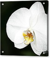 Bright White Orchid Acrylic Print
