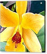 Bright Yellow And Red Cattleya Orchid Acrylic Print