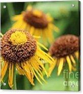 Bright Yellow Flowers Acrylic Print
