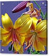 Bright Yellow Lilies Acrylic Print