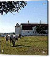 Brighton Barn And Horses Acrylic Print