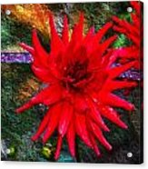 Brilliance In An Autumn Garden - Red Dahlia Acrylic Print