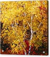 Brilliance Of Autumn On Rib Mountain Acrylic Print