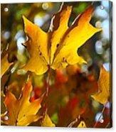 Brilliant Autumn Light And Color Acrylic Print