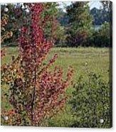 Brilliant Autumn Red Acrylic Print