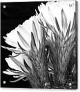 Brilliant Blossoms Diptych Left Acrylic Print