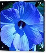 Brilliant Blue Acrylic Print