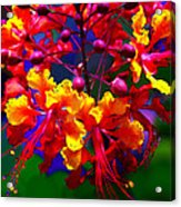 Brilliant Bouquet Acrylic Print