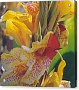 Brilliant Canna Lilies Acrylic Print by Robert Bray