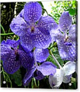 Brilliant Checkerboard Purple Orchid Acrylic Print