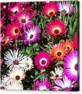 Brilliant Flowers Acrylic Print